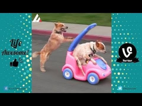 TRY NOT TO LAUGH or GRIN: Funny Animals Vines Compilation 2017 | Best Funny Dogs Videos Ever