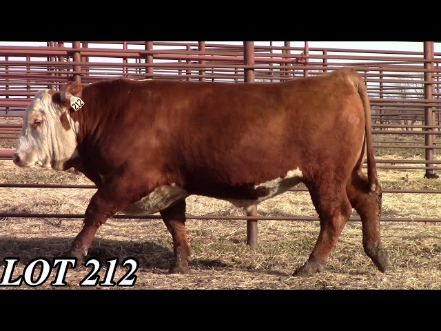 Mead Angus Farms Lot 212