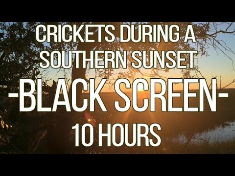 SOUTHERN SUNSET Crickets Chirping -BLACK SCREEN- | 10 hours | Original Recording