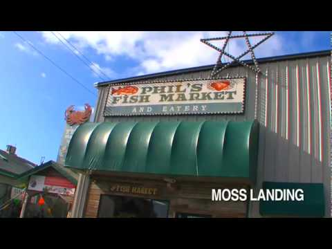 Phils fish market moss landing ca youtube for Phil s fish market eatery