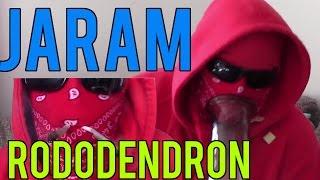 JARAM RODODENDRON