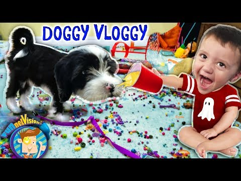 ITS OREO! FUNnel V Fam Doggy Vloggy! Whos Harder to Handle, Puppy or Baby After Christmas Vlo