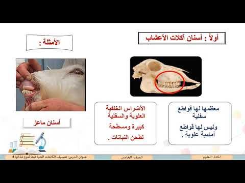 الصف الخامس العلوم تصنيف الكائنات الحية تبعا لنوع غذائها 4 Youtube