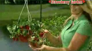 The Hanging Strawberry Garden Seen On Tv