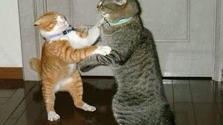 The best TRY NOT TO LAUGH CHALLENGE - Funny ANIMAL VIDEOS compilation