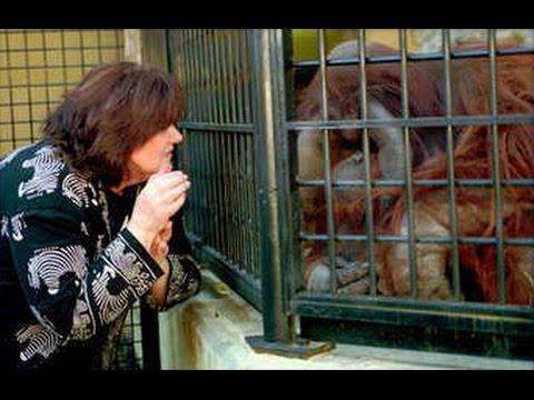 Simios Simbólicos 4/14 - Chantek: un Orangután Escapista - Prof. Manuel Lafarga