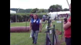 Alain et Hogan custine 2013 Debutant