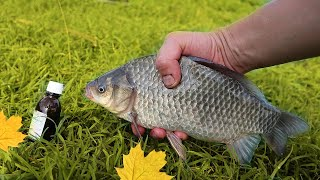 Рыба даже в холодной воде обожает это Ловля крупного карася карпа леща на куриный жир осенью