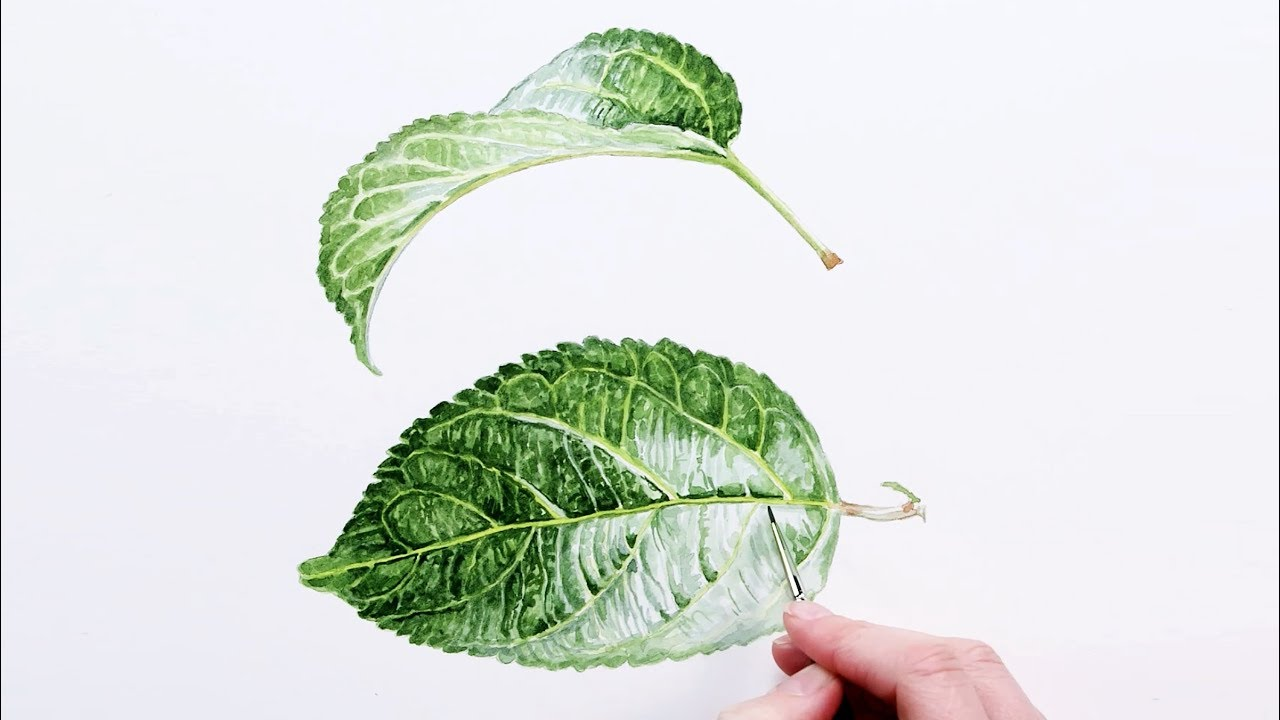how to paint realistic luscious leaves in watercolour with anna