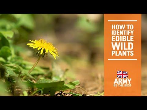 5 Edible Wild Plants - Bushcraft | How To | British Army