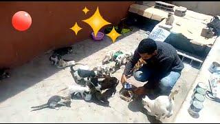 August 7, 2020 🐈 #Feed streets animals...اطعام حيوانات الشوارع بأكادير
