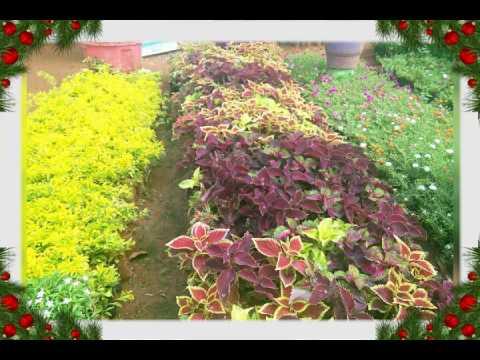 Sri balaji nursery gardens youtube sri balaji nursery gardens solutioingenieria Choice Image