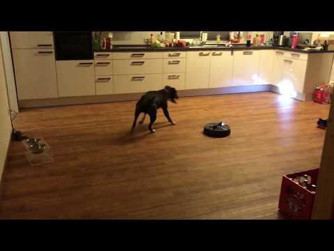 Roomba vs Dog vs Flashlight