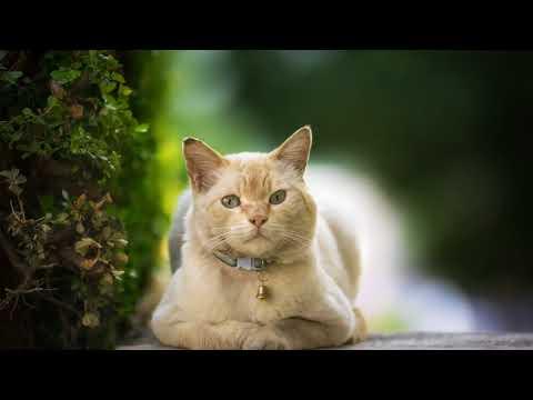 Как лечить перхоть у кошки в домашних условиях