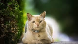 Как избавиться от перхоти у кошки в домашних условиях?