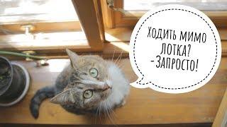 Как приучить котенка к лотку? Что делать если кошка стала ходить мимо лотка?