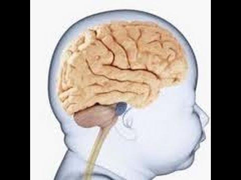 """Résultat de recherche d'images pour """"Infant Brain"""""""