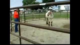 Wild Mustang Demo