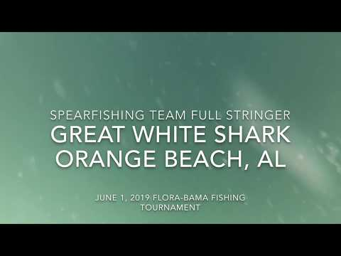 Austin James - Great white shark spotted near Orange Beach
