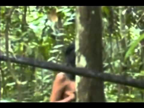 Rare New Video Captures Isolated Amazon Tribe