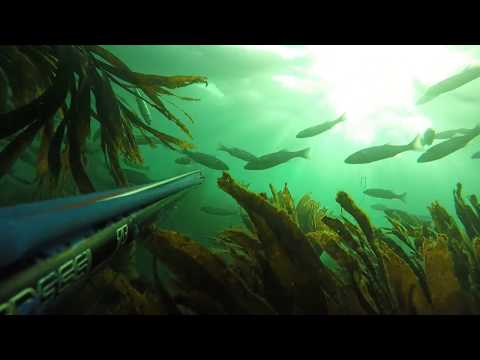 2 Shore Dives In Cornwall (Spearfishing)