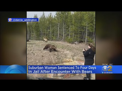 Woman Banned From Yellowstone National Park For Getting To Close To Grizzly Bear.