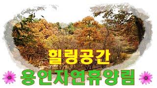 용인 자연휴양림 가을 풍경/ 네아들 연날리기/ 목공체험…