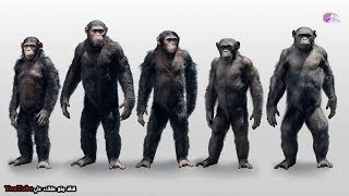 ماذا لو أصبح كوكب القرود حقيقة ! - ما الذى سيحدث ؟؟