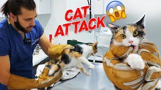 ¡EL GATO ATAQUE AL VETERINARIO!  ¡Cat Attack Next Level! ⬆ #TheVet