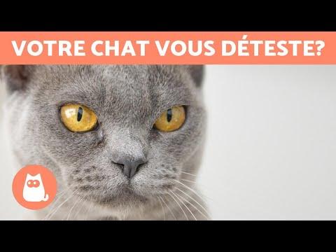 5 Signes Qui Indiquent Que Votre Chat Vous Déteste 😾