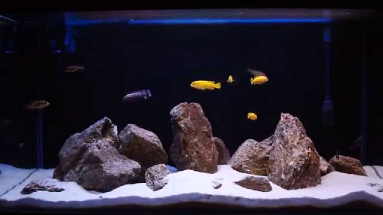 malawi lake aquarium 200 liters youtube. Black Bedroom Furniture Sets. Home Design Ideas