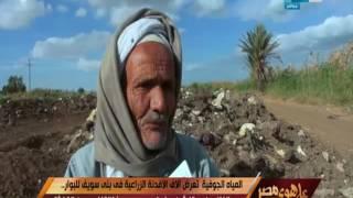 على هوى مصر - المياة الجوفية تقتل تعرض الاف الأفدنة الزراعية في بني سويف