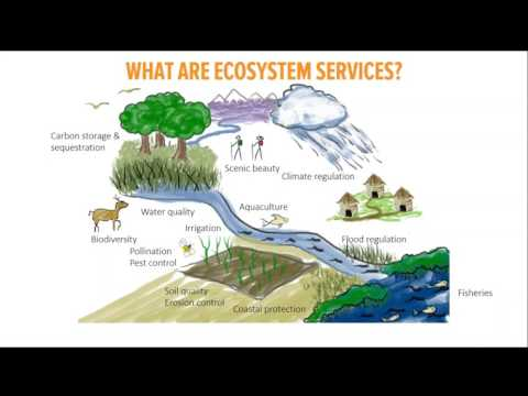Mapping investment opportunities for ecosystem services in Madagascar Feb 7 2017