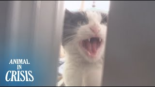Cat Who Risked Life To Repay The Gratitude Towards Her Owner | Animal In Crisis EP68