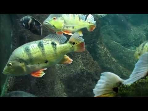 """""""Zoo-Aquarium Berlin""""- Ein Video von Karin und Wolfgang Schmökel"""