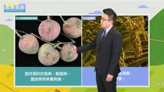 農業氣象1080522