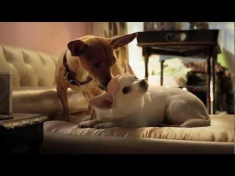 Beverly Hills Chihuahua 3   1  Wake Up HD