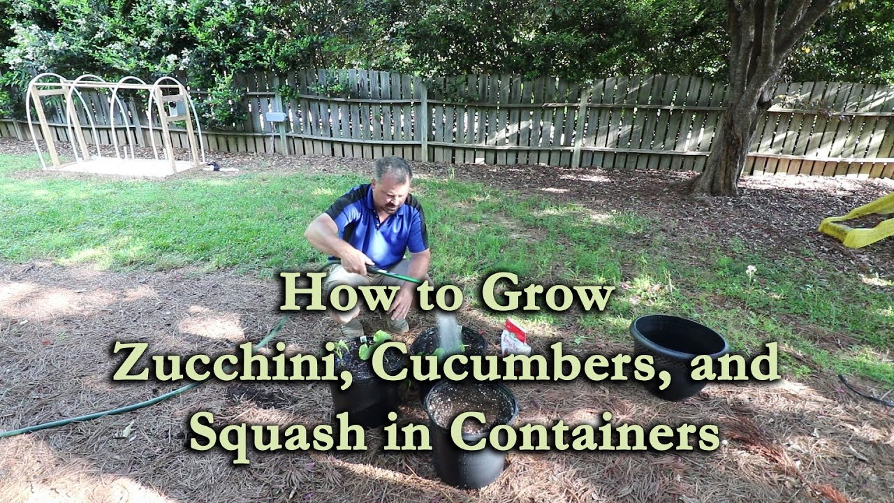 How To Grow Zucchini Cucumbers And Squash In Containers Youtube