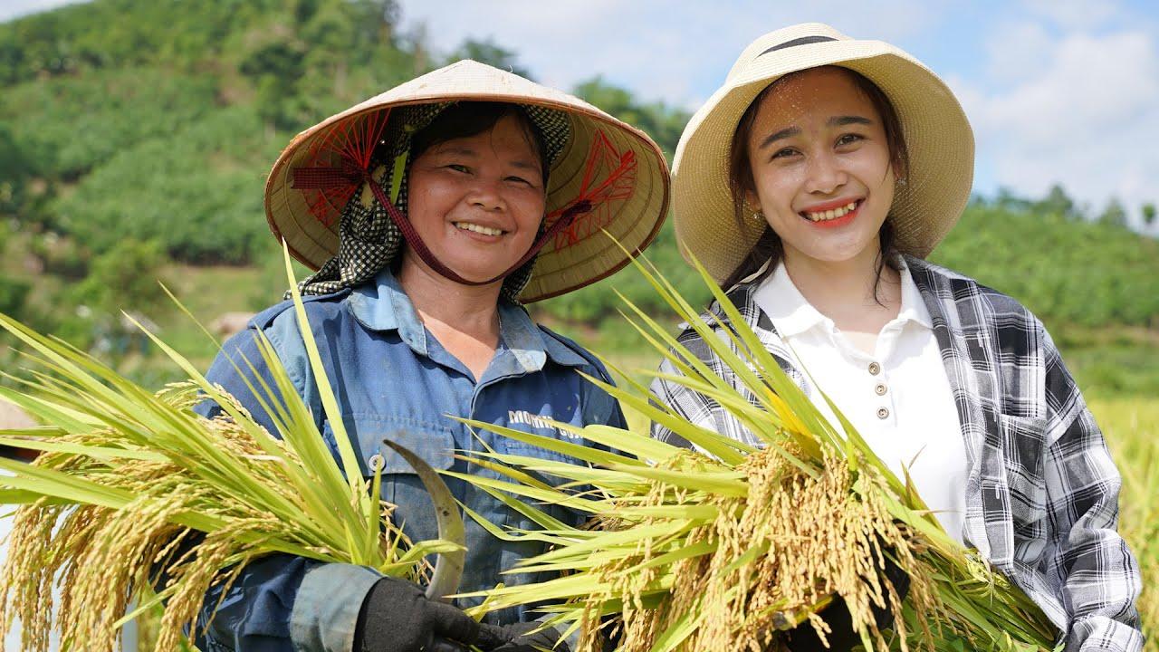 Trả công #1: Mẩy Thùy gặt lúa trả công nhà A Đô