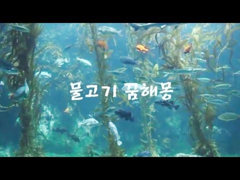 물고기 나오는꿈,물고기 꿈해몽,물고기 관련 꿈해몽 (MUHANCHANGJO)