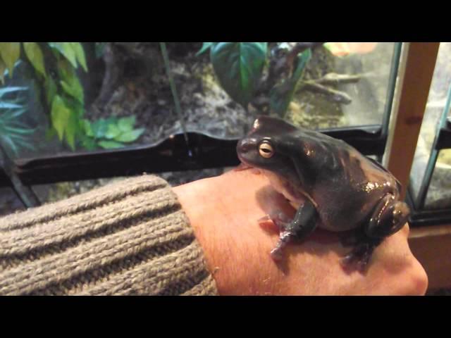 Lizard collection part 2 & Amphibians