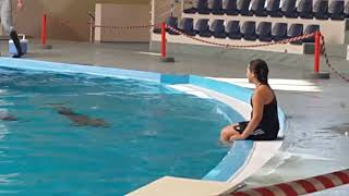 Türkei Urlaub Istanbul meine Schwester mit Delfinen geschwommen