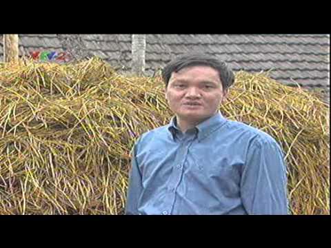 Quy trình trồng nấm rơm - Trung tâm Thông tin Khoa học và Công nghệ Đà Nẵng
