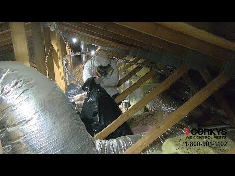 Corky's Attic Cleanout and Sanitation