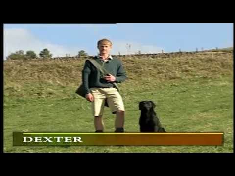 MODERN GUNDOG TRAINING RETRIEVER PART 2