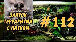 #112 ЗАПУСК ТЕРРАРИУМА С ПАУКОМ!!! STARTING A TERRARIUM WITH A SPIDER