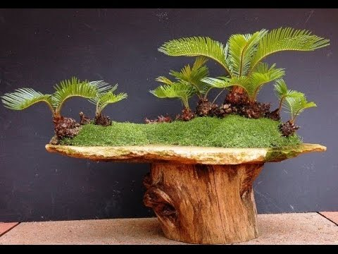 Coco Sago Palm Bonsai Plant Youtube