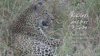 Kikilezi & her 3 Cubs