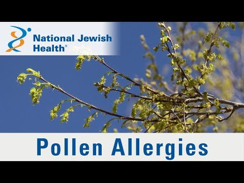 What Are Pollen Allergies and How Can You Manage Them?