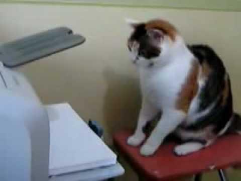 hepatic lipidosis cats treatment
